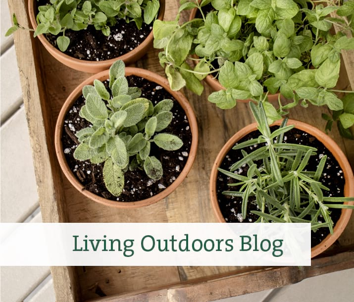 Living Outdoors Blog